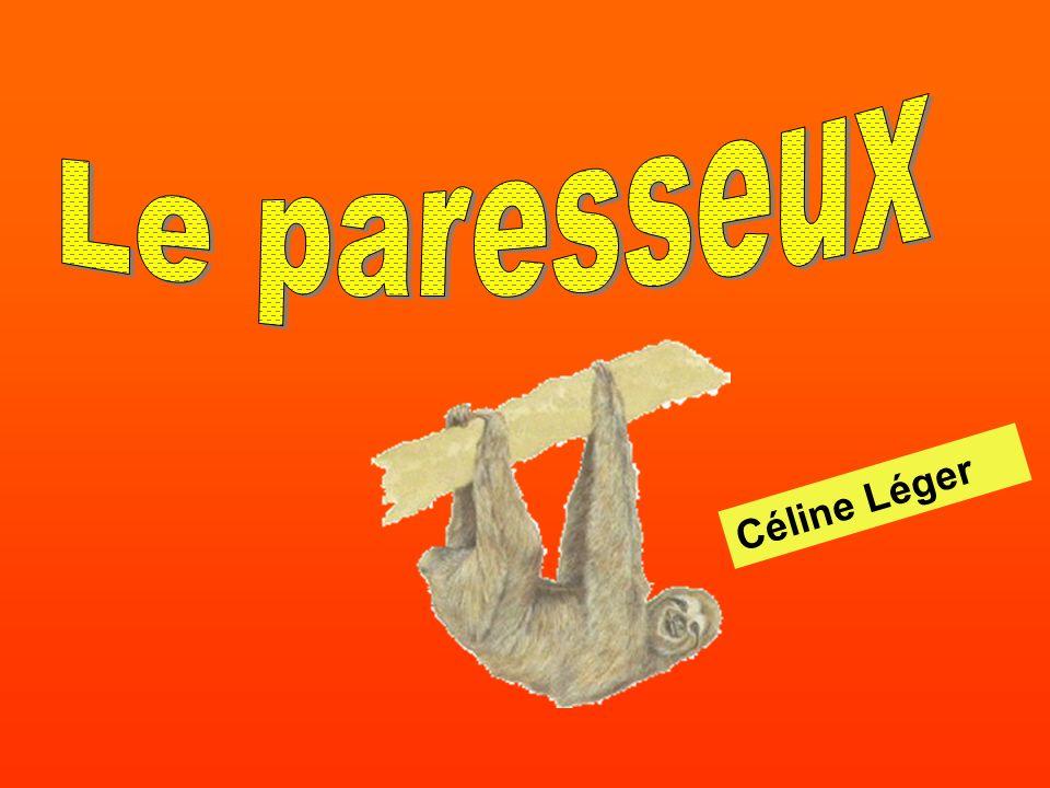 Le paresseux Céline Léger