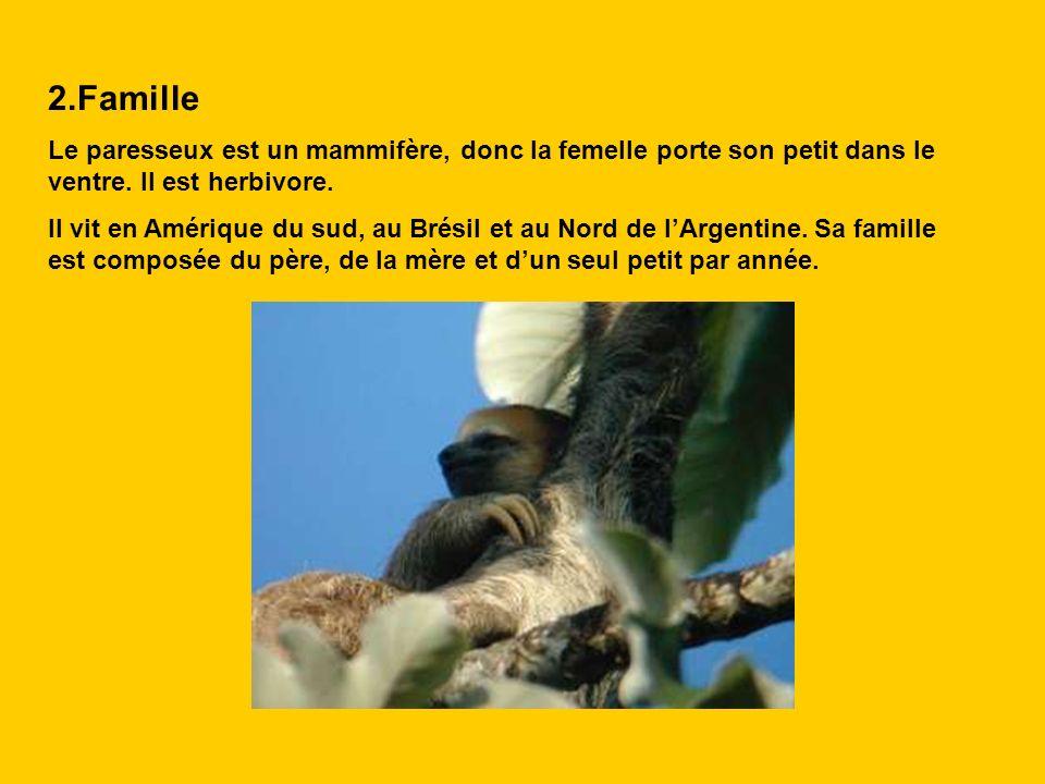 2.Famille Le paresseux est un mammifère, donc la femelle porte son petit dans le ventre. Il est herbivore.