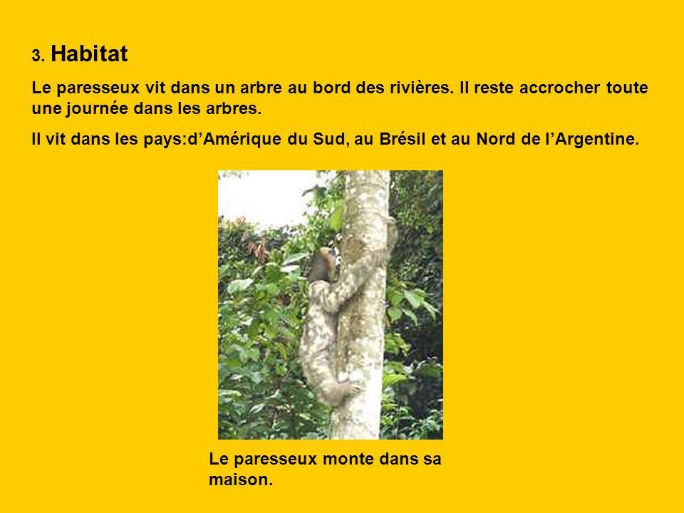 3. Habitat Le paresseux vit dans un arbre au bord des rivières. Il reste accrocher toute une journée dans les arbres.