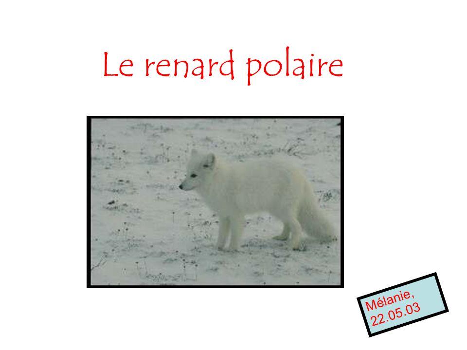 Le renard polaire Mélanie, 22.05.03