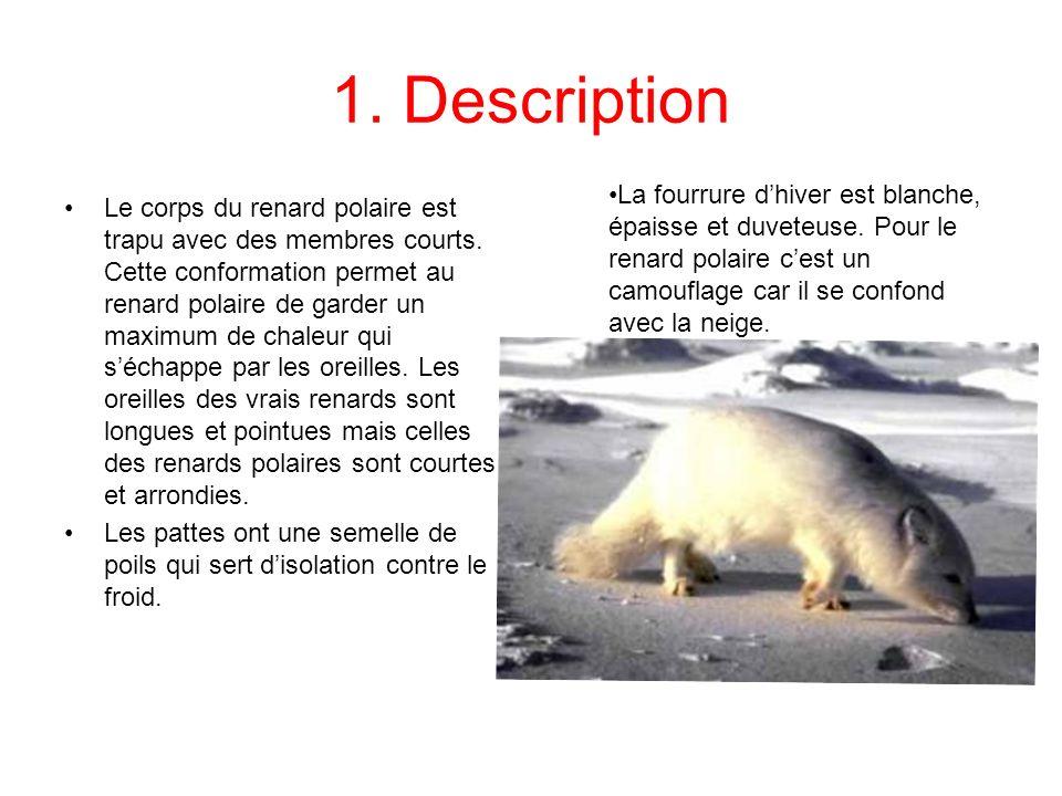 1. Description La fourrure d'hiver est blanche, épaisse et duveteuse. Pour le renard polaire c'est un camouflage car il se confond avec la neige.