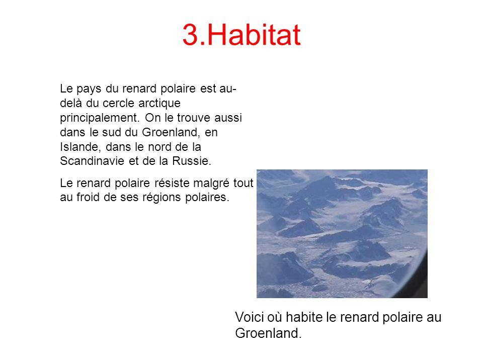 3.Habitat Voici où habite le renard polaire au Groenland.