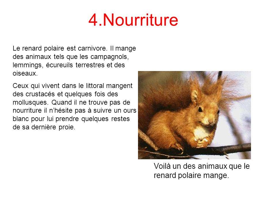 4.Nourriture Voilà un des animaux que le renard polaire mange.
