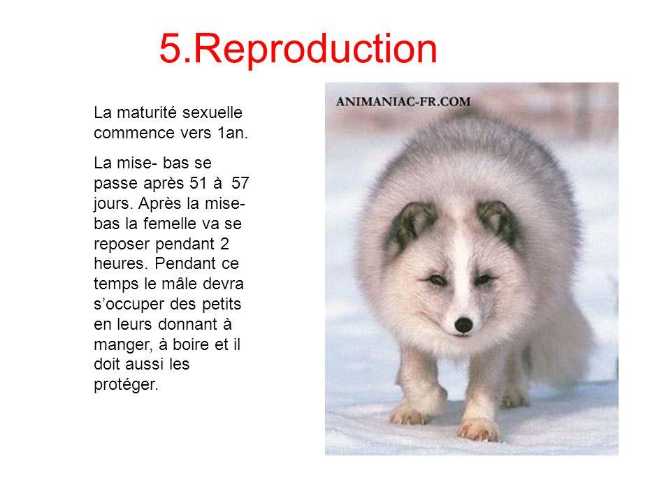 5.Reproduction La maturité sexuelle commence vers 1an.