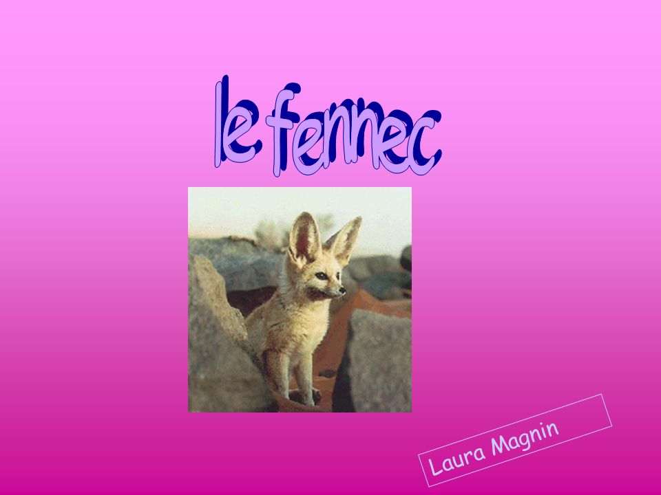 le fennec Laura Magnin