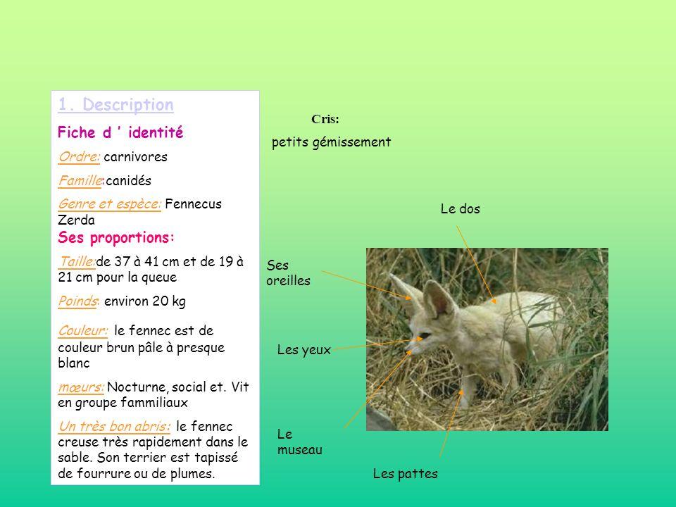 1. Description Fiche d ' identité Cris: Ordre: carnivores