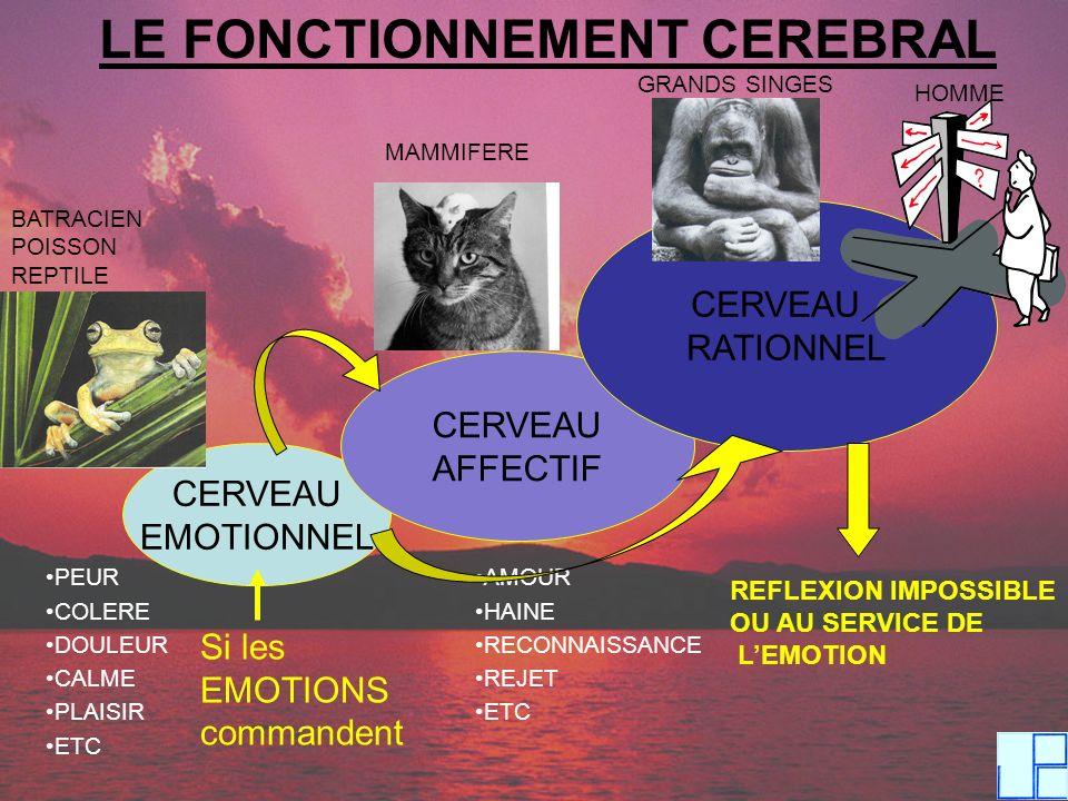 LE FONCTIONNEMENT CEREBRAL