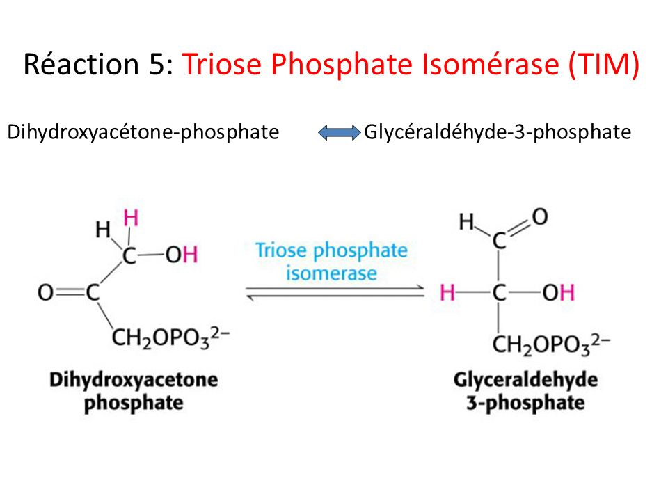 Réaction 5: Triose Phosphate Isomérase (TIM)
