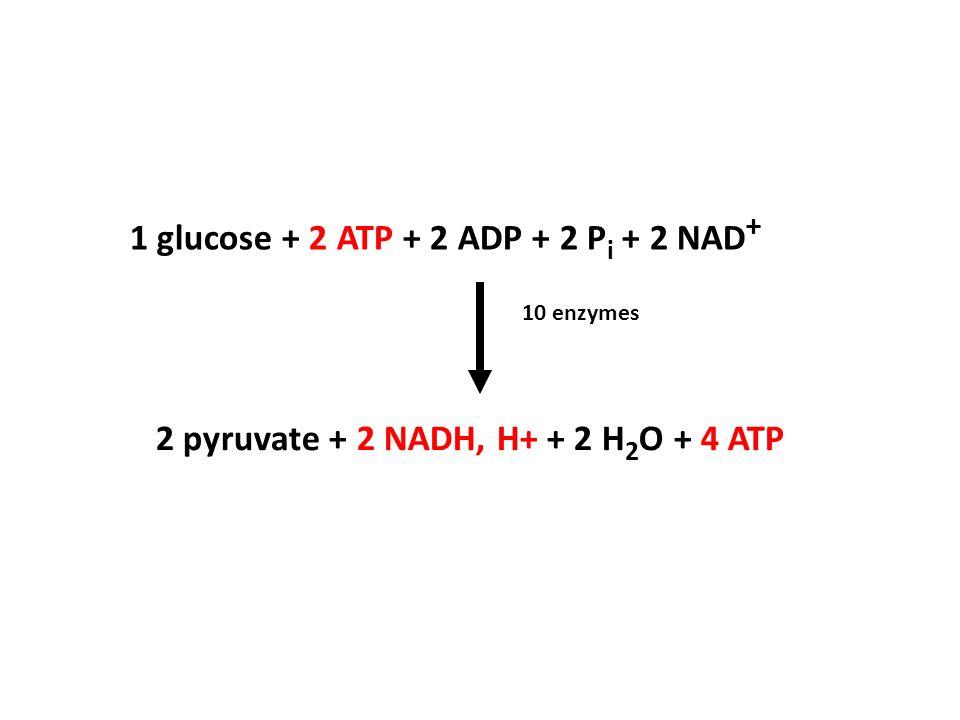 1 glucose + 2 ATP + 2 ADP + 2 Pi + 2 NAD+