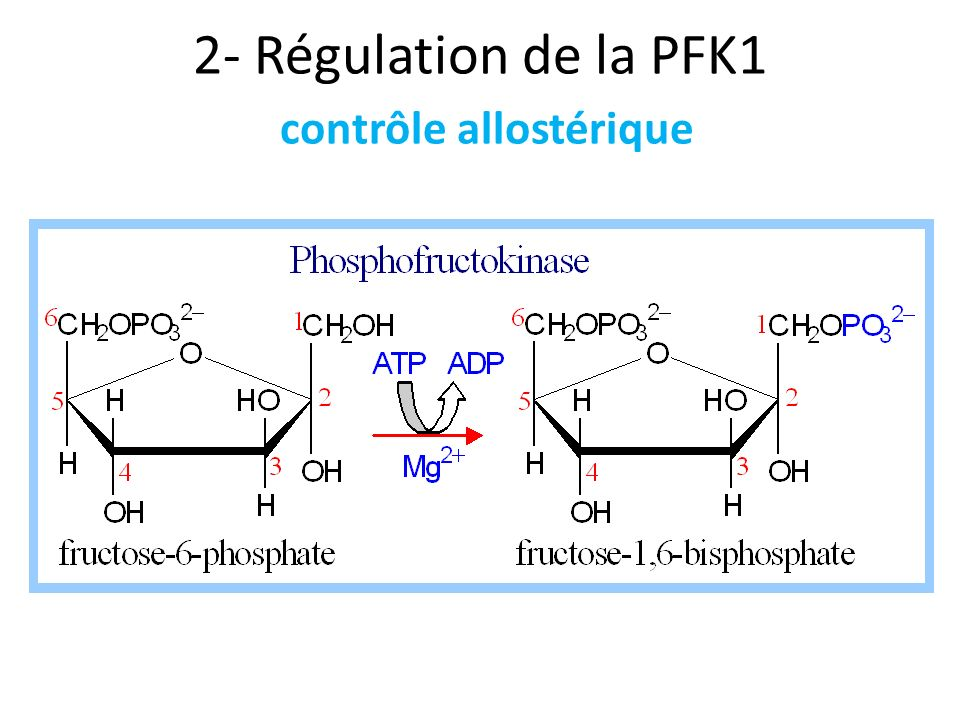 2- Régulation de la PFK1 contrôle allostérique