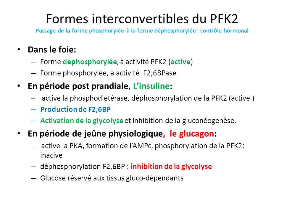 Formes interconvertibles du PFK2 Passage de la forme phosphorylée à la forme déphosphorylée: contrôle hormonal