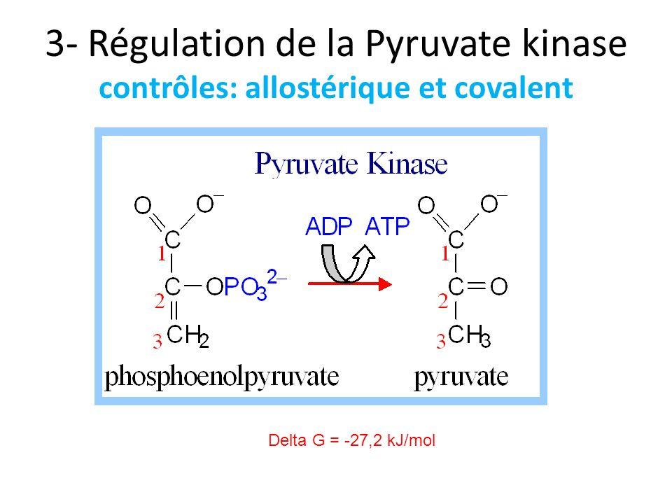 3- Régulation de la Pyruvate kinase contrôles: allostérique et covalent