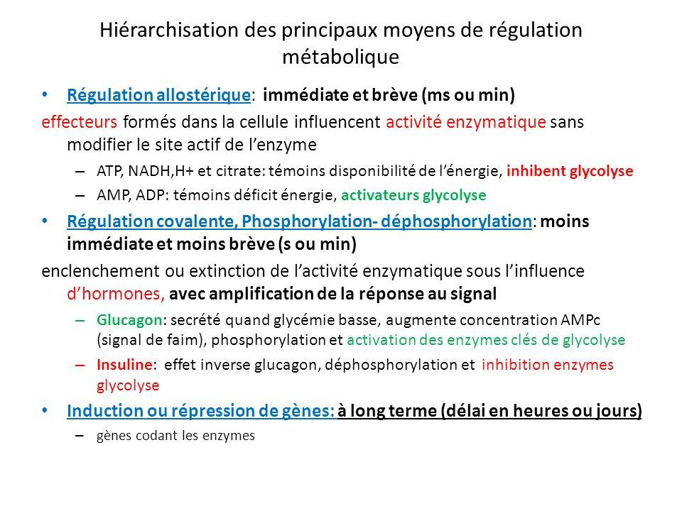 Hiérarchisation des principaux moyens de régulation métabolique