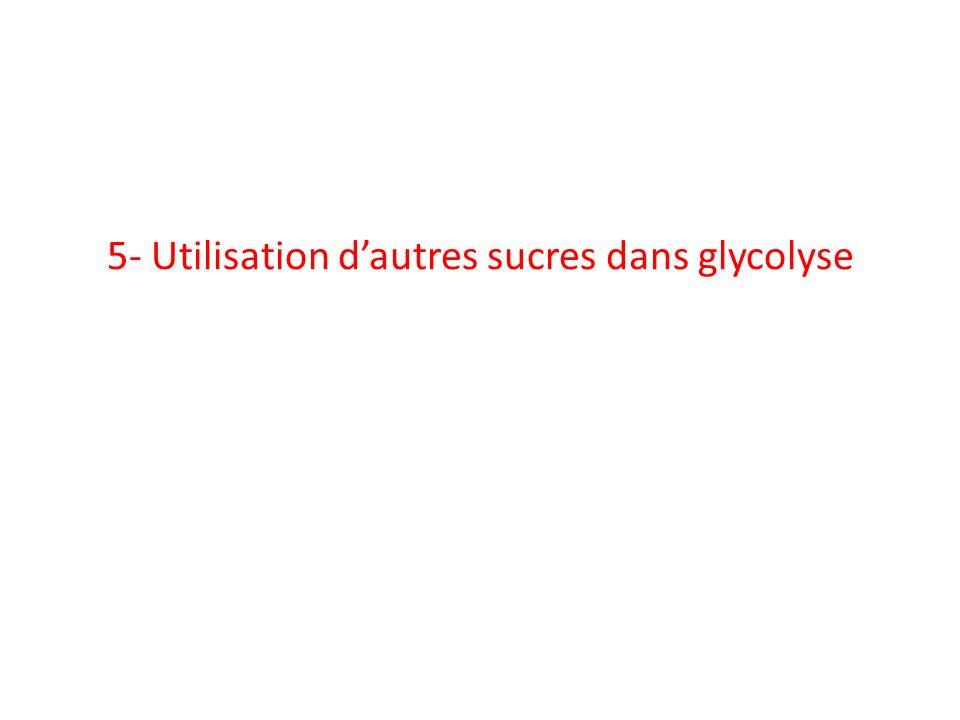 5- Utilisation d'autres sucres dans glycolyse
