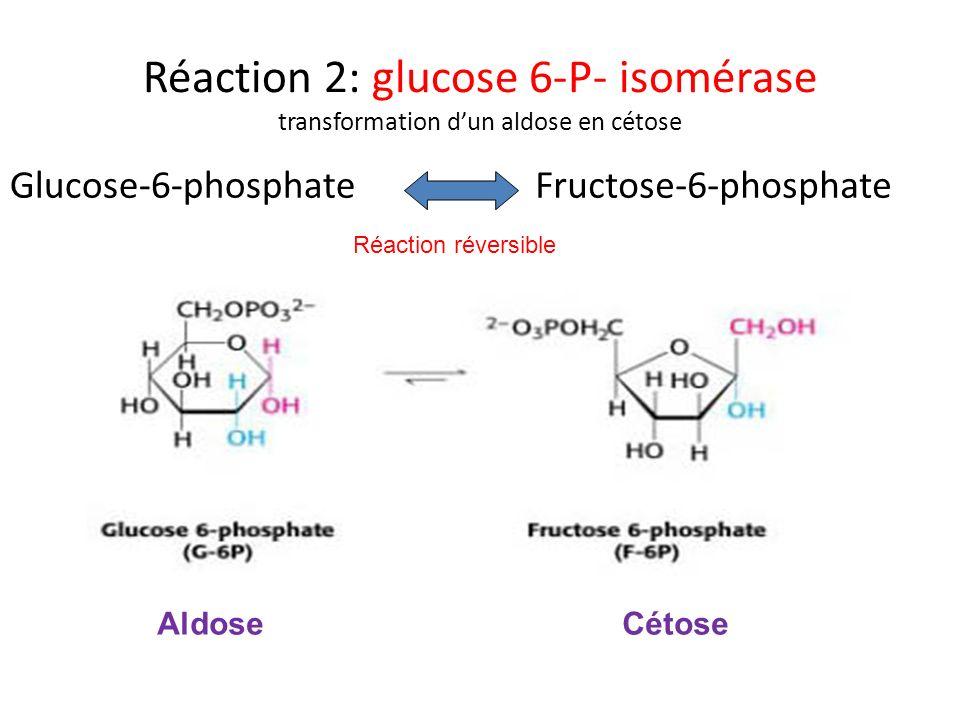 Réaction 2: glucose 6-P- isomérase transformation d'un aldose en cétose