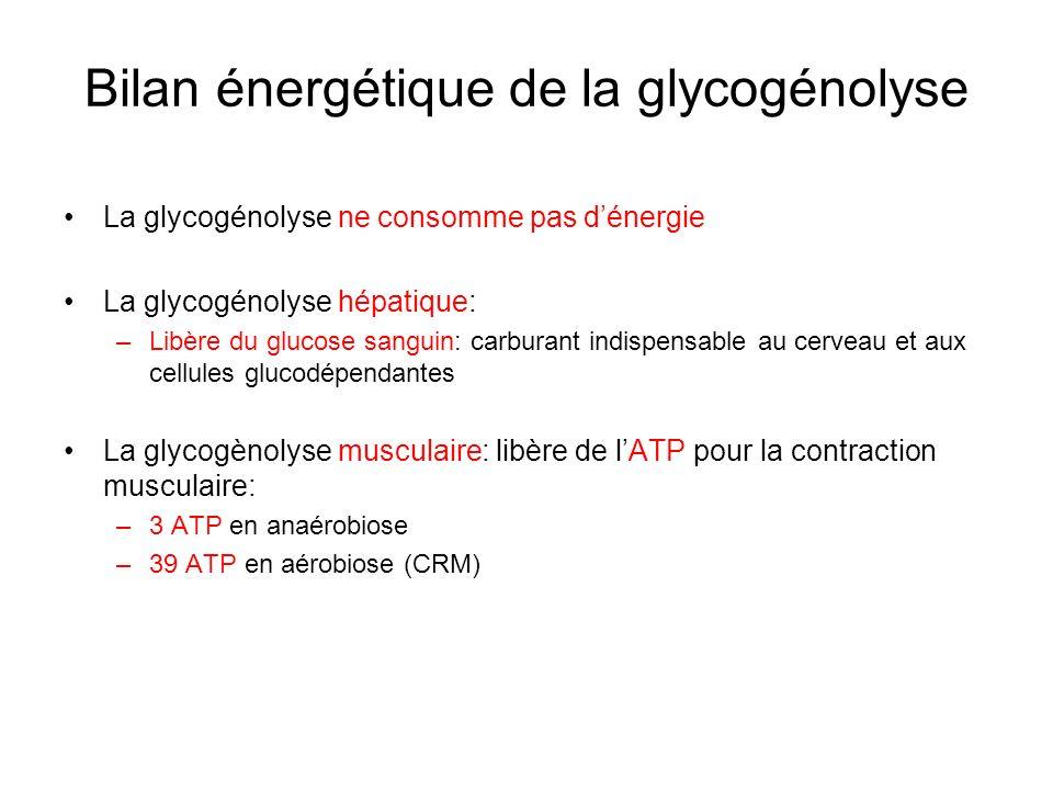 Bilan énergétique de la glycogénolyse