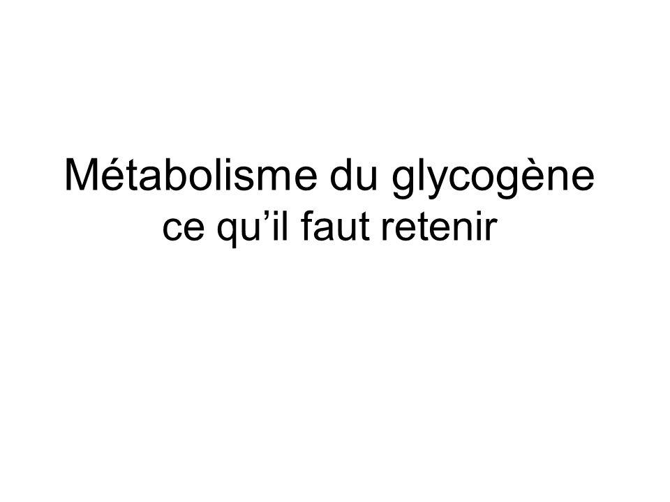 Métabolisme du glycogène ce qu'il faut retenir