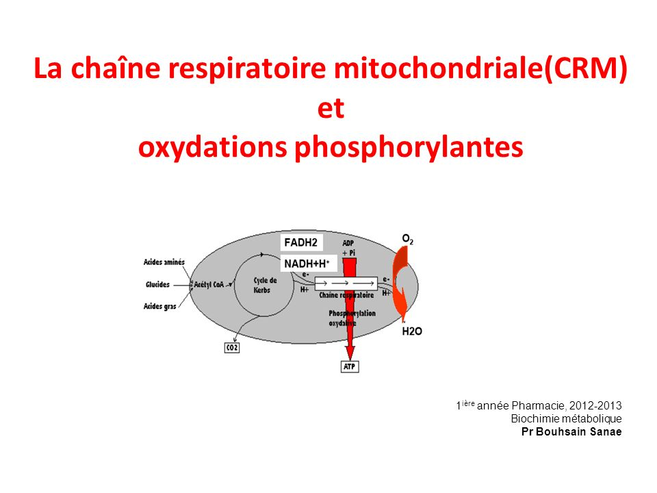 La chaîne respiratoire mitochondriale(CRM) et oxydations phosphorylantes