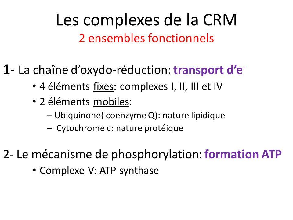 Les complexes de la CRM 2 ensembles fonctionnels