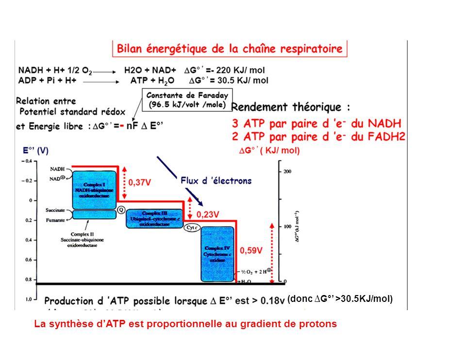 La synthèse d'ATP est proportionnelle au gradient de protons