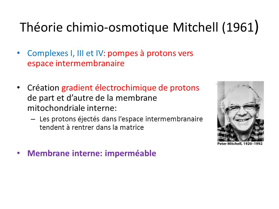 Théorie chimio-osmotique Mitchell (1961)