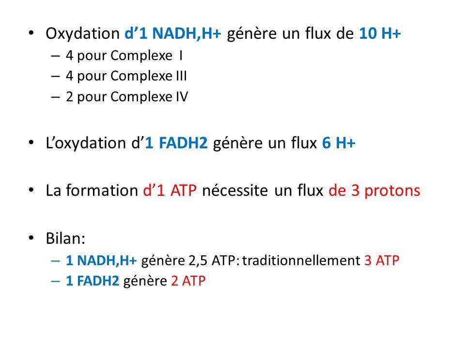 Oxydation d'1 NADH,H+ génère un flux de 10 H+
