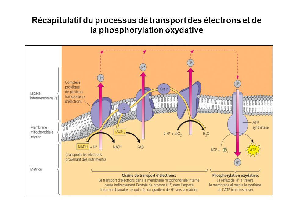 Récapitulatif du processus de transport des électrons et de la phosphorylation oxydative