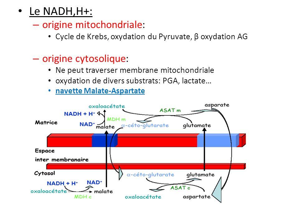 Le NADH,H+: origine mitochondriale: origine cytosolique: