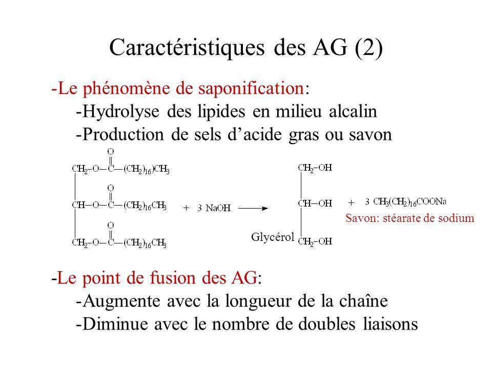Caractéristiques des AG (2)