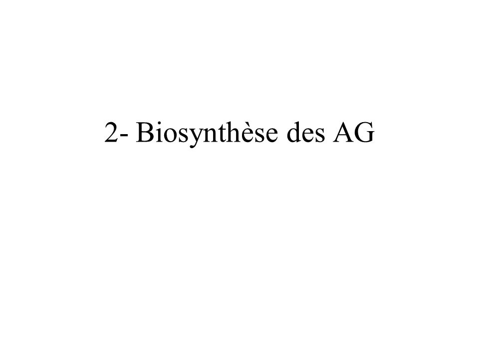2- Biosynthèse des AG