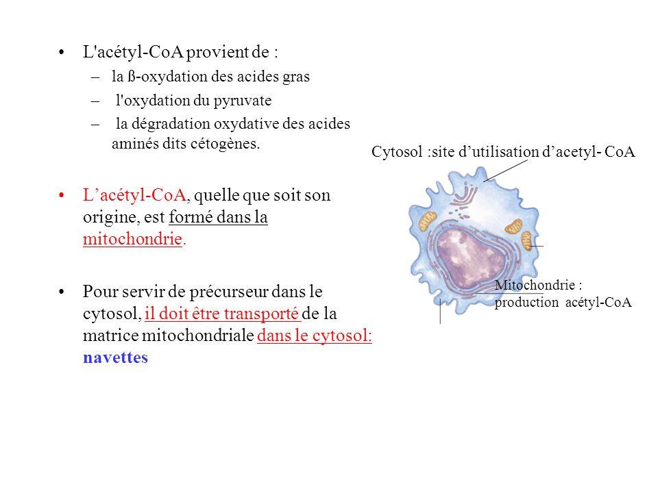L acétyl-CoA provient de :