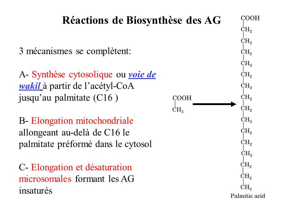 Réactions de Biosynthèse des AG
