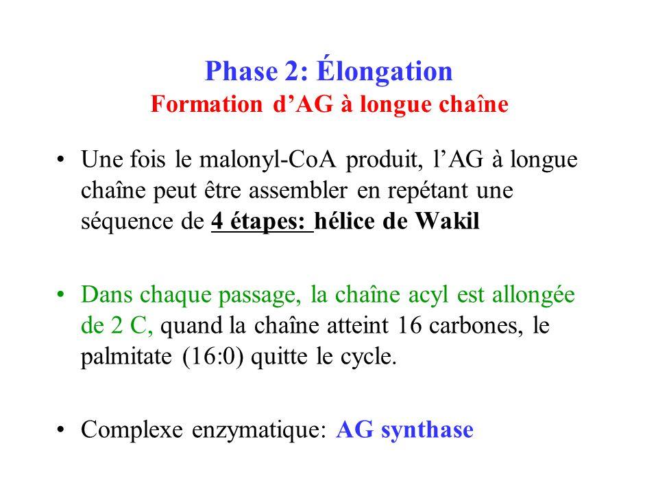 Phase 2: Élongation Formation d'AG à longue chaîne