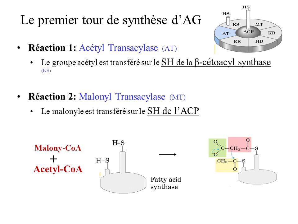 Le premier tour de synthèse d'AG