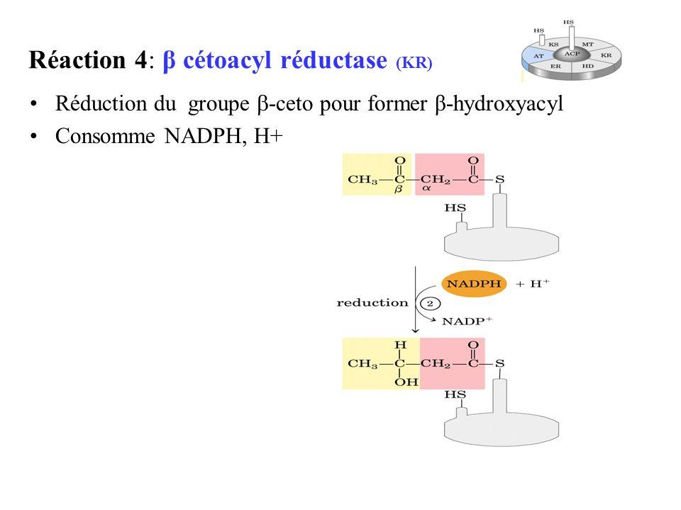 Réaction 4: β cétoacyl réductase (KR)