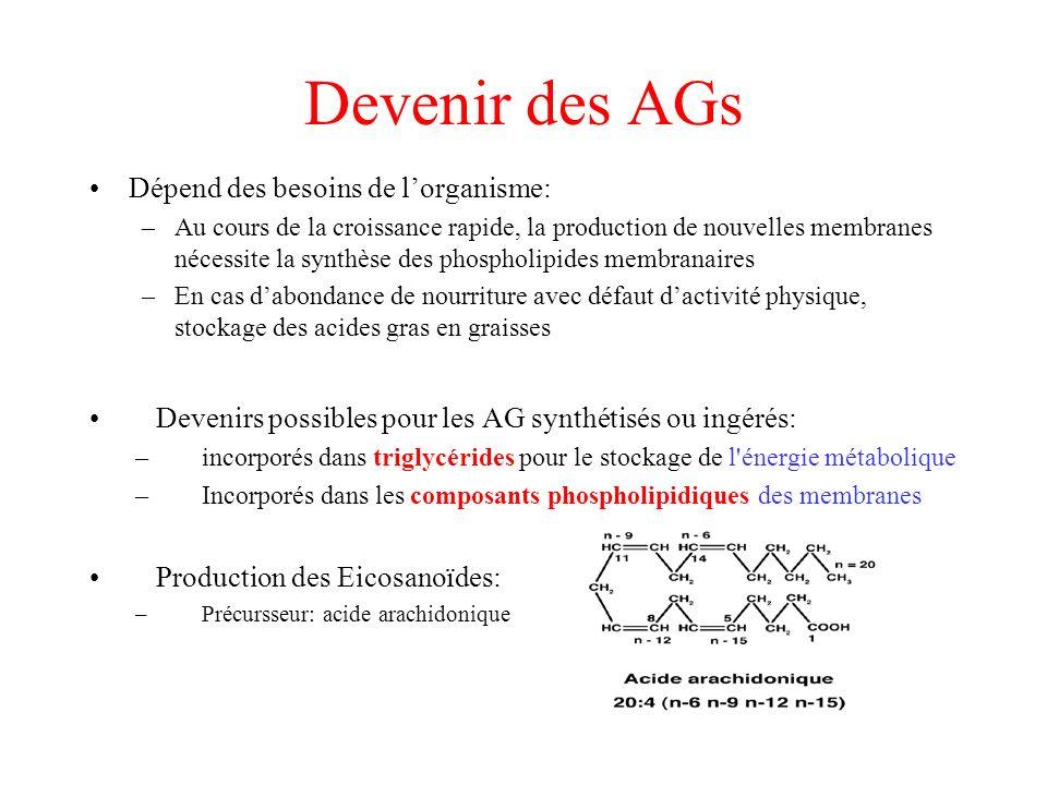 Devenir des AGs Dépend des besoins de l'organisme: