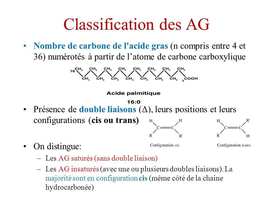 Classification des AG Nombre de carbone de l acide gras (n compris entre 4 et 36) numérotés à partir de l'atome de carbone carboxylique.