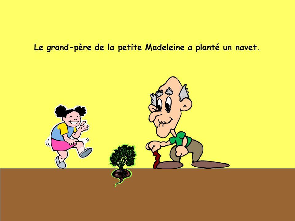 Le grand-père de la petite Madeleine a planté un navet.