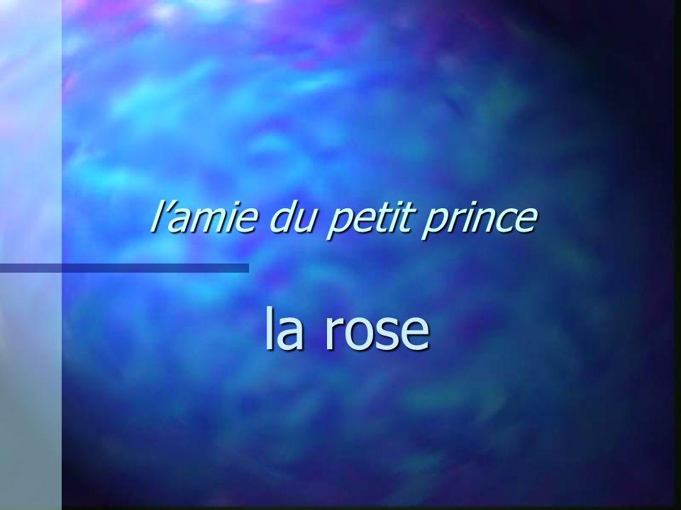 l'amie du petit prince la rose