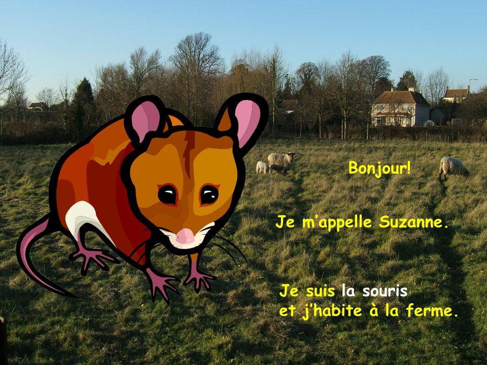 Bonjour! Je m'appelle Suzanne. Je suis la souris et j'habite à la ferme.