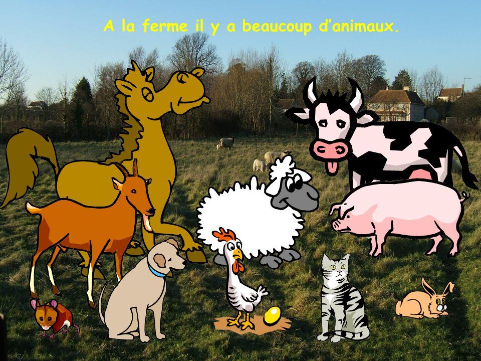 A la ferme il y a beaucoup d'animaux.