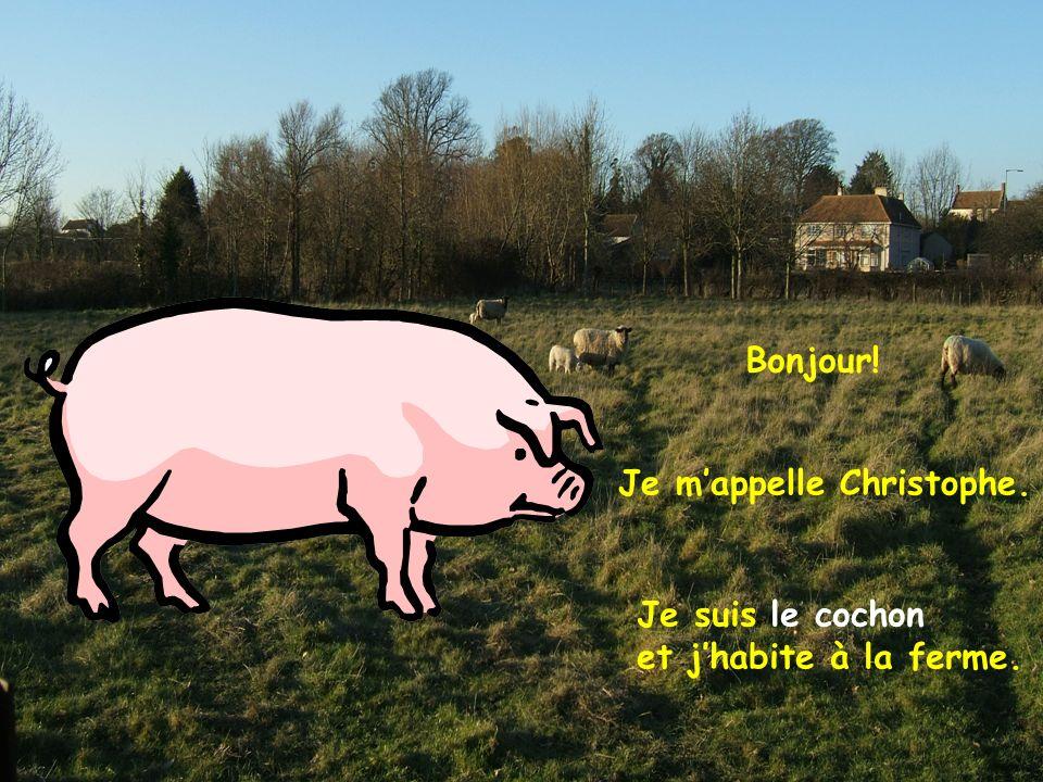 Bonjour! Je m'appelle Christophe. Je suis le cochon et j'habite à la ferme.
