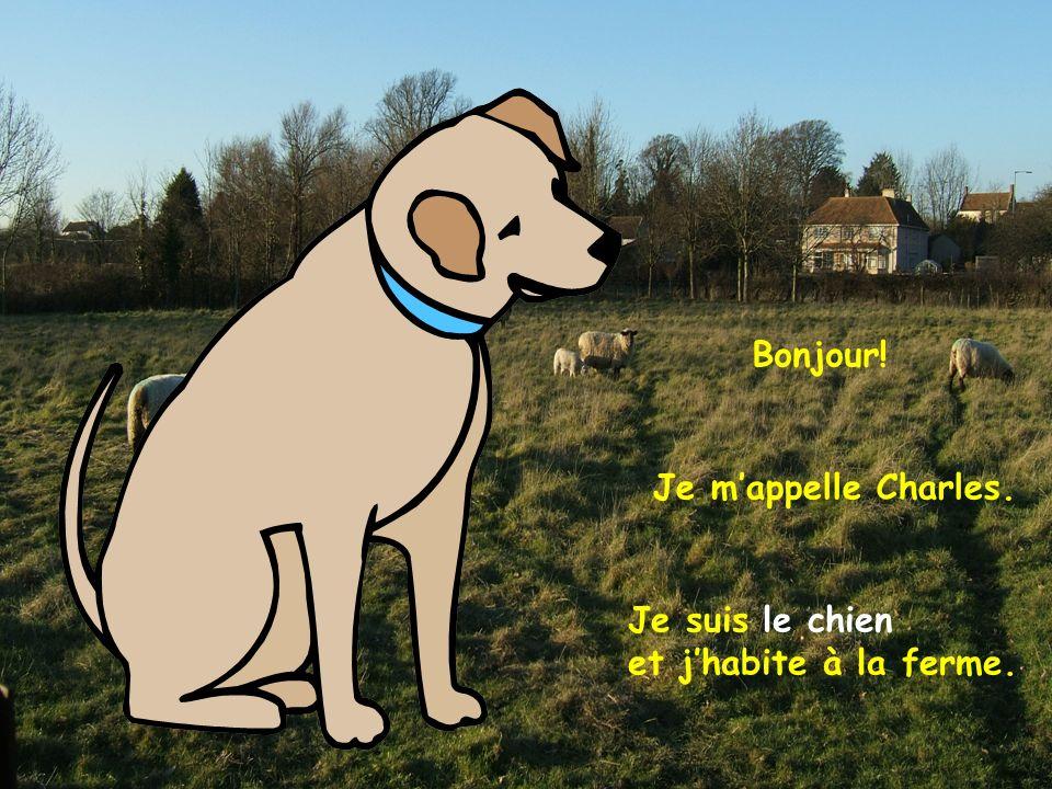 Bonjour! Je m'appelle Charles. Je suis le chien et j'habite à la ferme.