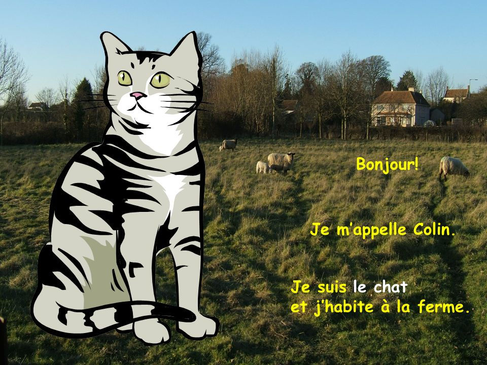 Bonjour! Je m'appelle Colin. Je suis le chat et j'habite à la ferme.