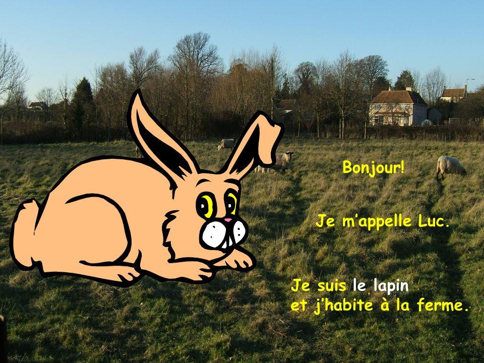 Bonjour! Je m'appelle Luc. Je suis le lapin et j'habite à la ferme.