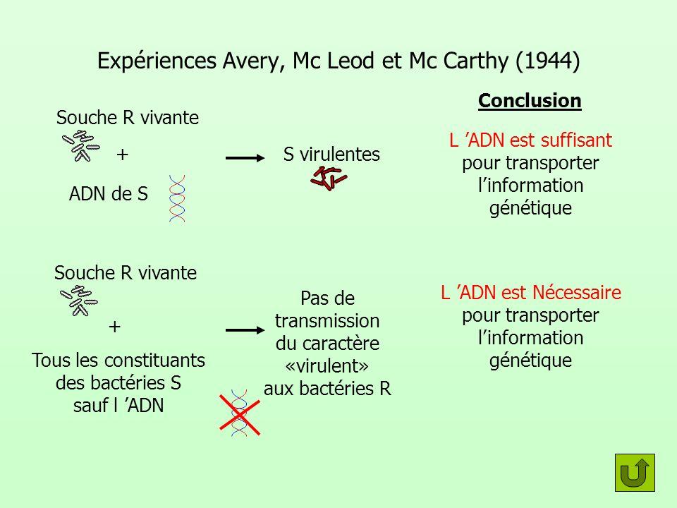 Expériences Avery, Mc Leod et Mc Carthy (1944)
