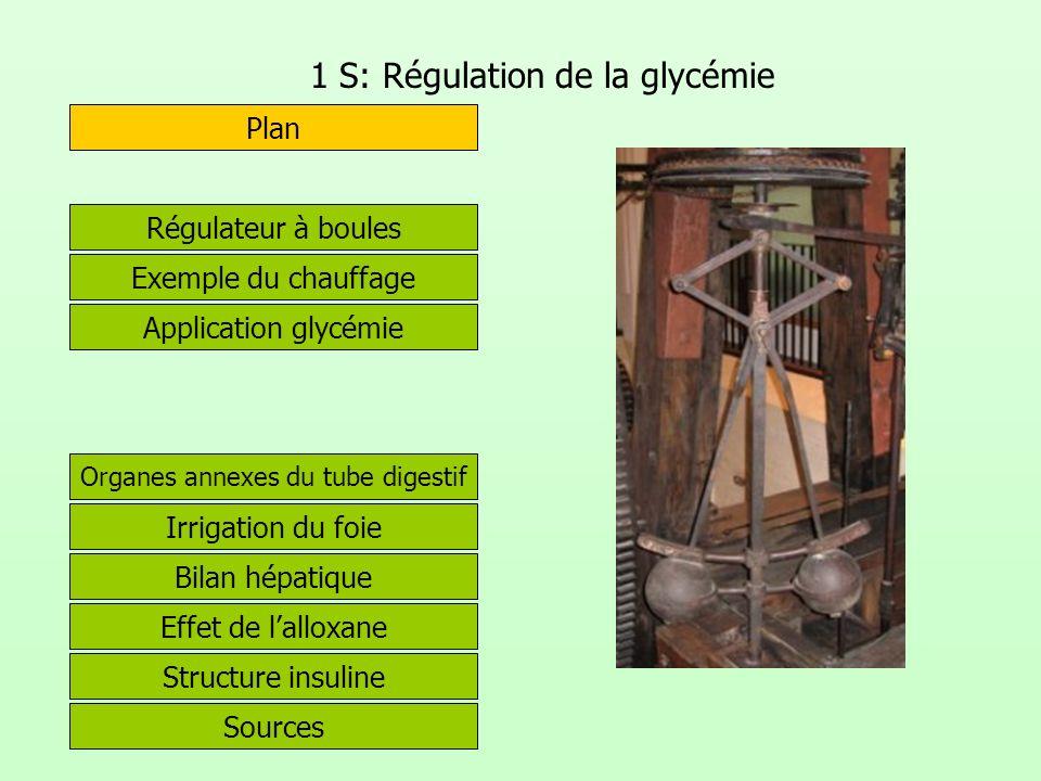 1 S: Régulation de la glycémie