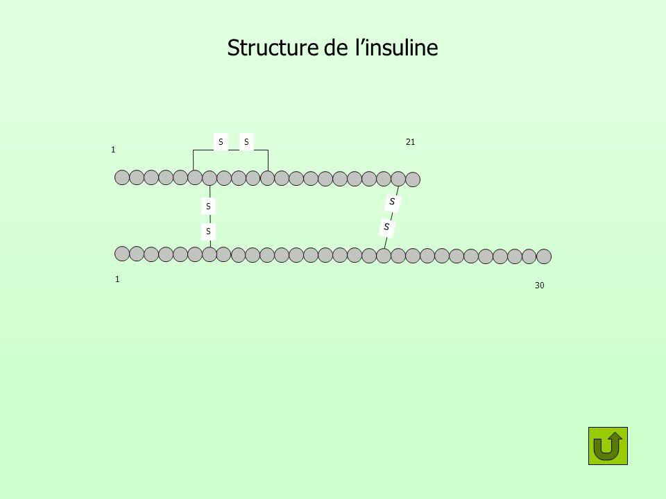 Structure de l'insuline