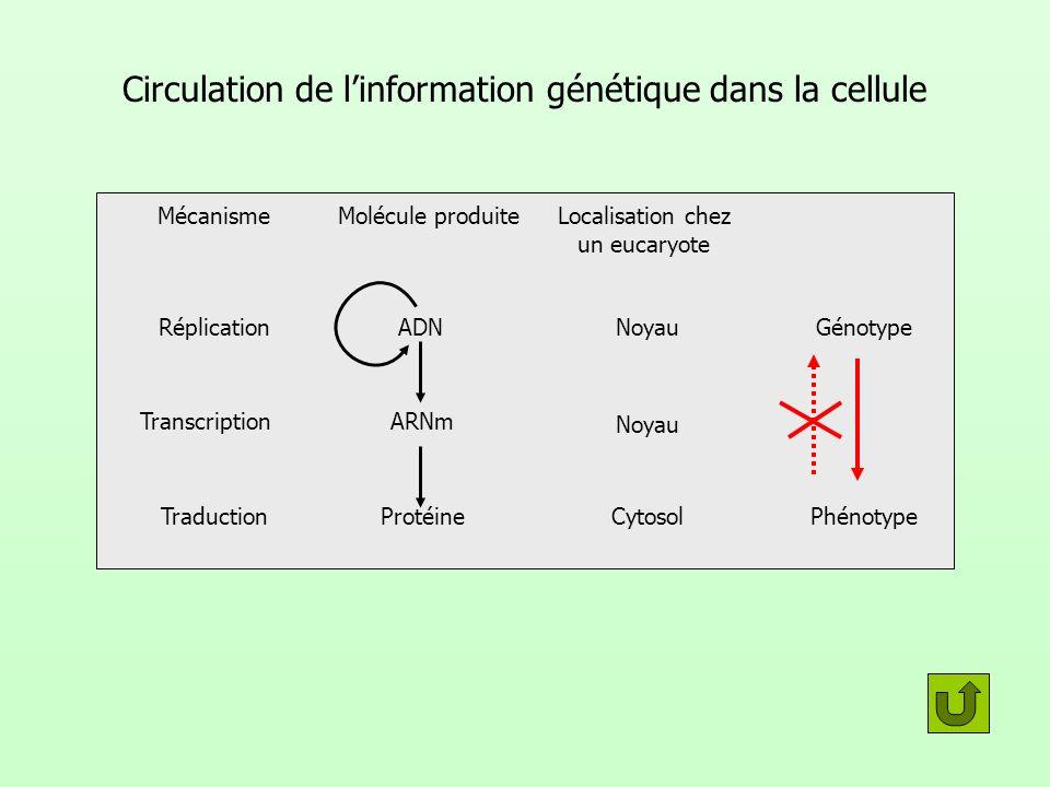 Circulation de l'information génétique dans la cellule