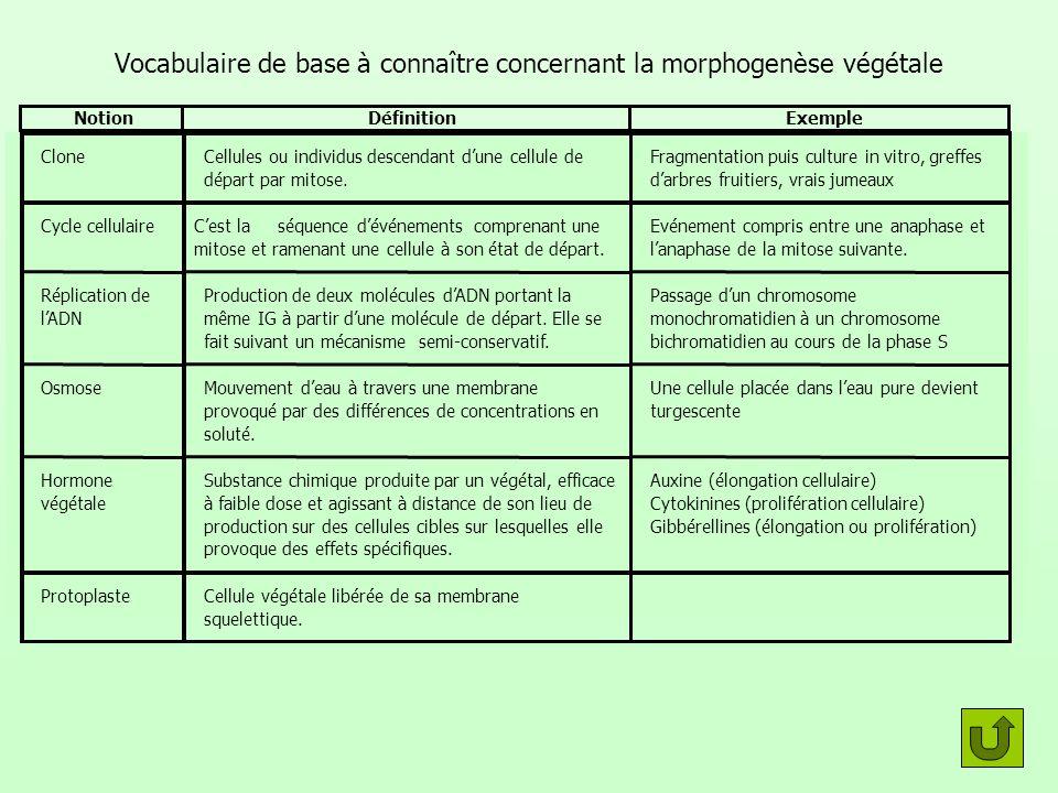 Vocabulaire de base à connaître concernant la morphogenèse végétale